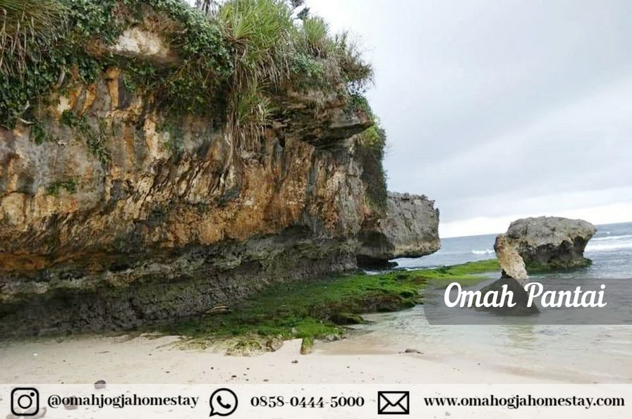 Homestay Omah Pantai Jogja - View